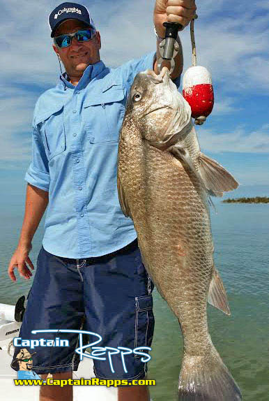 black drum chokoloskee fishing charter everglades city
