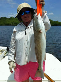 everglades city chokoloskee fishing charter