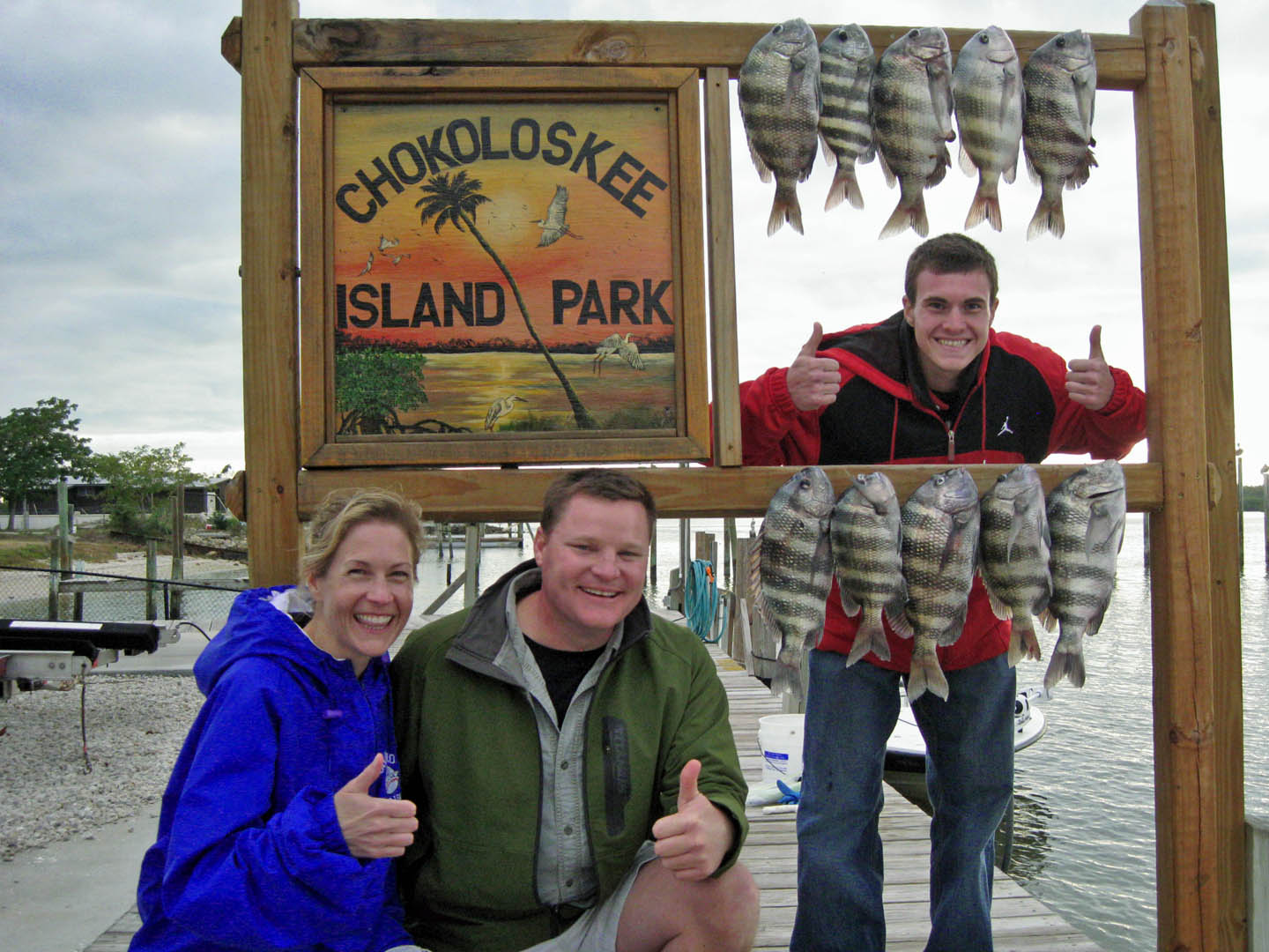 Sheepshead catch fishing report everglades city chokoloskee guide fishing
