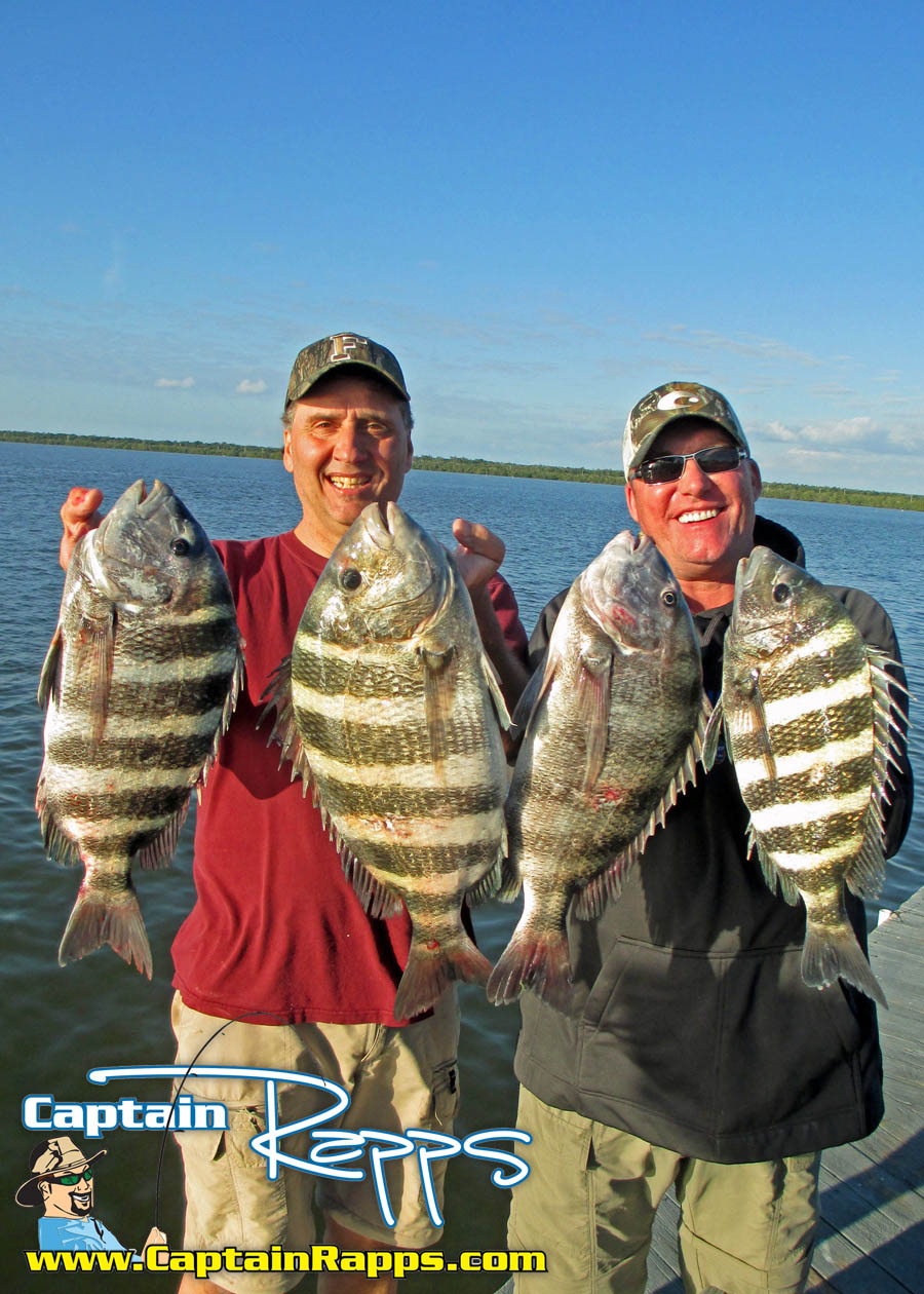 sheepshead everglades fishing charters chokoloskee 10000 islands marco island
