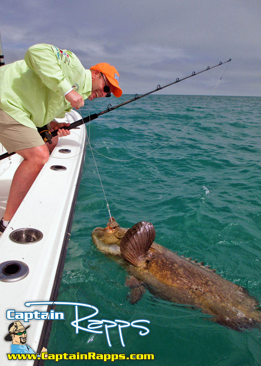 goliath grouper everglades fishing charter chokoloskee