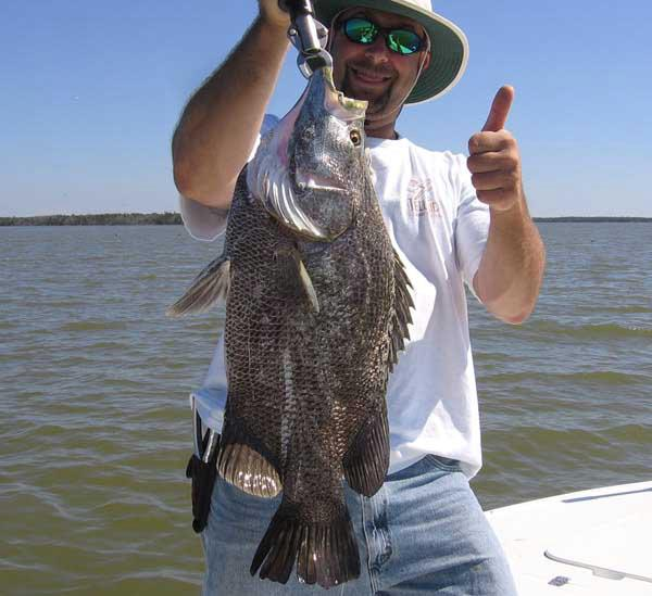 Guide Charter Everglades City Chokoloskee Tripletail