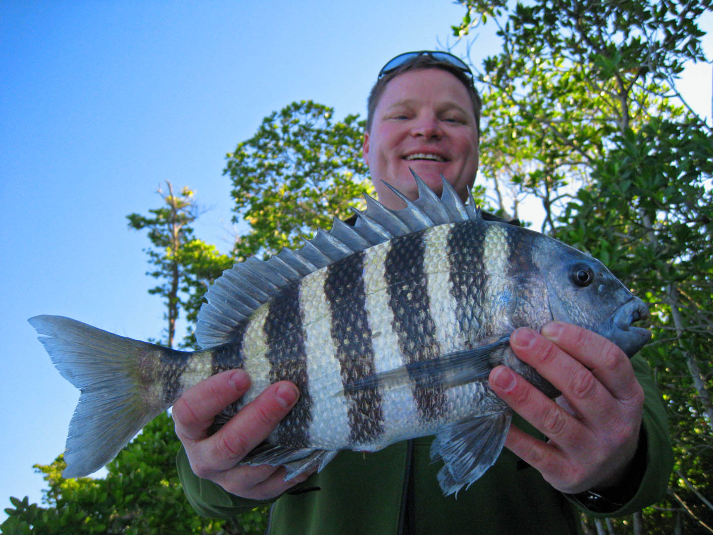 Kevin and a Sheepshead chokoloskee everglades city fishing charter